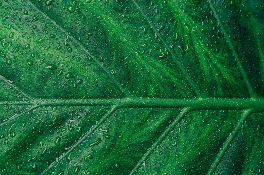 绿叶,壁纸,养眼,时间